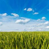 在多云的天空下绿草 — 图库照片