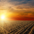 Red sunset over ploughed farm field — Stock Photo