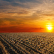Red sunset over ploughed farm field — Stock Photo #10426476