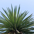 Top of subtropical tree — Stock Photo