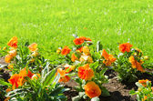 Flower with green grass — Stock Photo