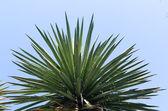 亚热带树的顶部 — 图库照片