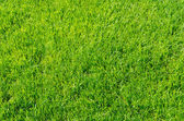 Green grass as background — Stock Photo