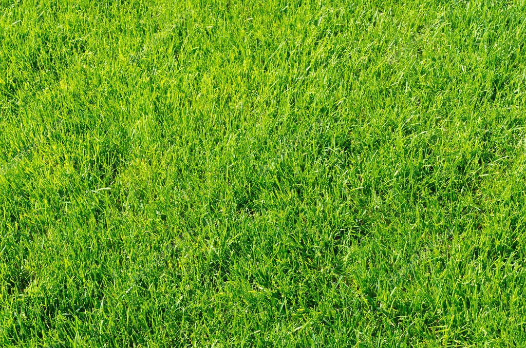 Green grass as background — Stock Photo #10426738