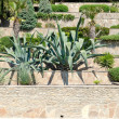 Tropical garden with agave - Stock Photo