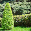 Green park with little pyramid of bush - Stock Photo