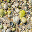 Green sea shells with sand — Stock Photo