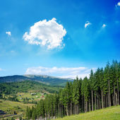Beautiful green mountain landscape with trees in Carpathians — Stock Photo