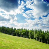 Green mountain landscape with trees in Carpathians — Stock Photo