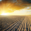 Agricultural black field and sunset - Stock Photo
