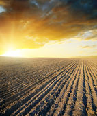 Agricultural black field and sunset — Stock Photo