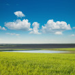 Green field and pond — Stock Photo