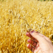 Gold harvest in hand — Stockfoto