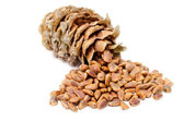 Cones and Nuts of Siberian Cedar Pine — Stock Photo