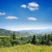 Beautiful green mountain landscape with trees in Carpathians — Foto de Stock