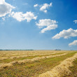 Harvest in windrows and sunny sky with clouds — Stock Photo #9231465