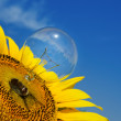 Old light bulb and sunflower - Stock Photo