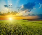 Sunset over agricultural green field — Stock Photo