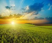 Zachód słońca nad rolne zielonej łące — Zdjęcie stockowe