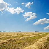 Harvest in windrows and sunny sky with clouds — Stock Photo