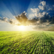 Sunset over agricultural green field - 