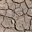 Dry earth as texture — Stock Photo
