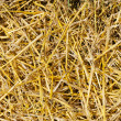Straw closeup as background — Stock Photo