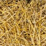 Straw closeup as background — Stock Photo
