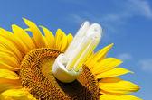 Energy saving lamp in sunflower — Stock Photo