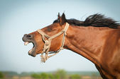 Funny Horse — Stock Photo