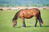 Horses on the pasture — Stockfoto