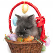 Easter rabbit inside a basket full of easter eggs (isolated on white) — Stock Photo