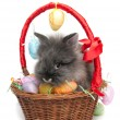 Easter rabbit inside a basket full of easter eggs (isolated on white) — Stock Photo #9207573