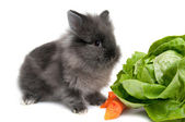 Small black bunny isolated on white background — Stock Photo
