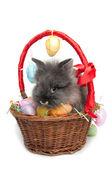 Easter rabbit inside a basket full of easter eggs (isolated on white) — Stock Photo