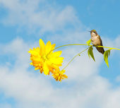 Little hummingbird perche on a flower. — Stock Photo