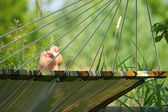 Relaxing in the hammock. — Stock Photo