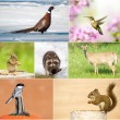 Wildlife collage. — Stock Photo