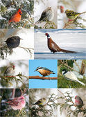 Winter birds collection. — Stock Photo