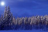Winter — Photo
