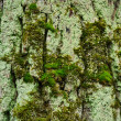 Trunk of old tree with moss — Stock Photo