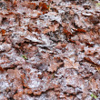 Fallen oak leaves — Stockfoto #8055884