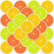 Citrus fruit background - vector — Stock Vector #8054102