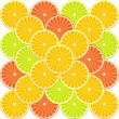 Citrus fruit background - vector — Stock Vector #8054145
