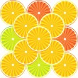Citrus fruit background - vector — Stock Vector #8054188