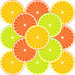 Citrus fruit background - vector — Stock Vector #8054222