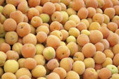 Apricot at the market — Stock Photo