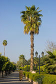 Park with palm trees — Stock Photo