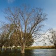 Stock Photo: Spring flooding