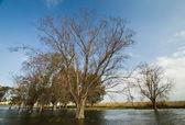 Spring flooding — Stock Photo